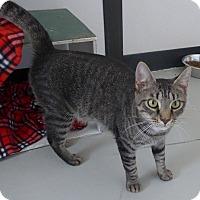 Adopt A Pet :: Scottie - Manning, SC