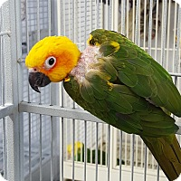 Adopt A Pet :: Statler and Waldorf - Grandview, MO