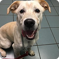 Adopt A Pet :: Rusty - Bellbrook, OH
