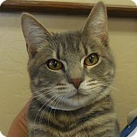 Adopt A Pet :: Gabe - Wickenburg, AZ
