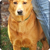 Adopt A Pet :: Tennille - Ft. Lauderdale, FL