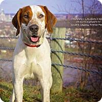 Adopt A Pet :: Donna - Cincinnati, OH