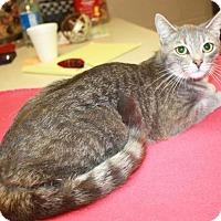 Adopt A Pet :: Samara - Cottageville, WV