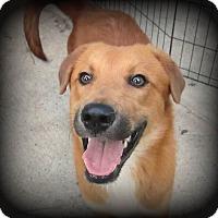 Adopt A Pet :: Brunson - North East, FL