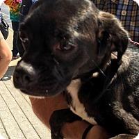 Adopt A Pet :: Princess Leai - Christiana, TN