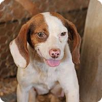Adopt A Pet :: Ruthie - Pittsboro, NC