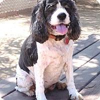 Adopt A Pet :: Dottie - Santa Barbara, CA