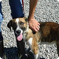Adopt A Pet :: Schuster - Waverly, OH