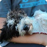Adopt A Pet :: Fiona Frauenfeld - Brooklyn, NY