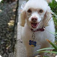 Adopt A Pet :: Peaches - North Richland Hills, TX
