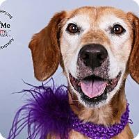 Adopt A Pet :: Georgina - Cincinnati, OH
