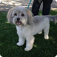 Adopt A Pet :: Ozzie - Temecula, CA
