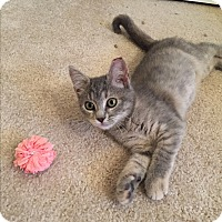 Adopt A Pet :: LunaCP - Carlisle, PA