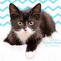 Adopt A Pet :: Jager - Sterling Heights, MI