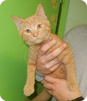 Domestic Mediumhair Kitten for adoption in Newport, North Carolina - Sparky