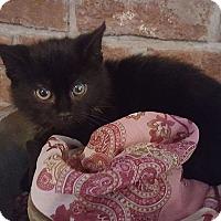 Adopt A Pet :: Beck - Minot, ND