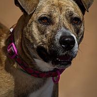 Adopt A Pet :: Deedee - Westminster, CA