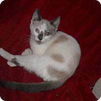 Adopt A Pet :: Tia - Roseville, MN