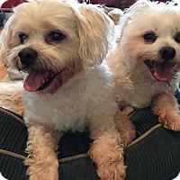 Adopt A Pet :: Fabrizio - Smithtown, NY