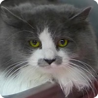 Adopt A Pet :: Laurita 34457975 - Westampton, NJ