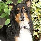 Adopt A Pet :: Moss