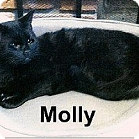 Adopt A Pet :: Molly - Medway, MA