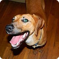 Adopt A Pet :: Sheba - Huntsville, TN