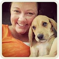 Adopt A Pet :: Camo - Orlando, FL