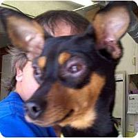 Adopt A Pet :: Dewey - Topeka, KS