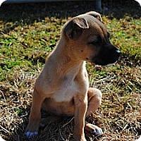 Adopt A Pet :: Monroe (photo link) - Richmond, VA
