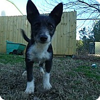 Adopt A Pet :: meesha - Gadsden, AL