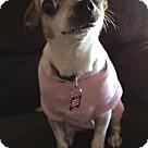 Adopt A Pet :: Tara 6 lbs.