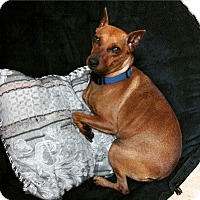 Adopt A Pet :: Sassy - Davie, FL