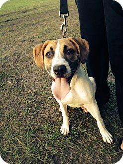 Cranston Animal Shelter Dogs For Adoption