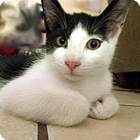Adopt A Pet :: OREO - DeLand, FL