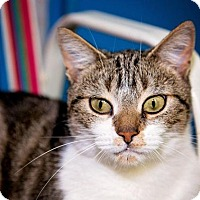 Adopt A Pet :: Naomi - Norwich, NY