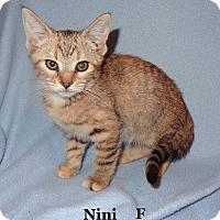 Adopt A Pet :: Nini - Bentonville, AR