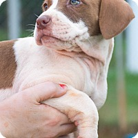 Adopt A Pet :: Love - $250 - Seneca, SC