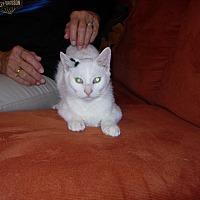 Adopt A Pet :: Kate - New Carlisle, OH