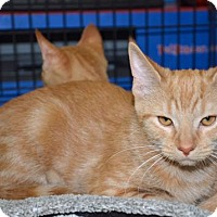 Adopt A Pet :: Tulip - Morgantown, WV