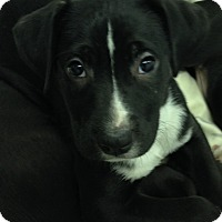 Adopt A Pet :: Rayne - Washington, PA