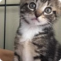 Adopt A Pet :: Fallon - Island Park, NY