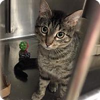 Adopt A Pet :: Mystique - Wichita, KS