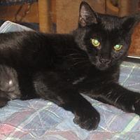 Adopt A Pet :: Jazmine - Hazlet, NJ