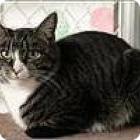 Adopt A Pet :: Fluffy - Freeport, NY