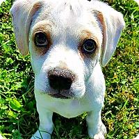 Adopt A Pet :: Cash - Indianapolis, IN