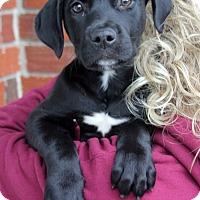 Adopt A Pet :: Casey - Harrison, NY