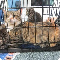 Adopt A Pet :: NOELLE - Waterford, VA