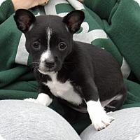 Adopt A Pet :: Tipper (2.5 lb) Video! - Sussex, NJ