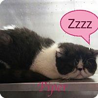 Adopt A Pet :: Piper - El Cajon, CA